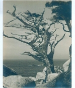 "Julius Shulman-Vintage Collection-""The Ocean & The Tree""- 1930""s"