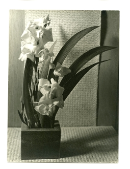 "Julius Shulman - Vintage Collection - ""Flowers"", Circa 1930's"