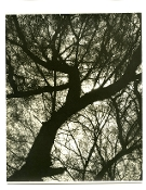 "Julius Shulman-2 Vintage Collection Prints-""Trees"", Circa 1930's"