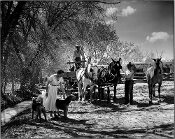 Julius Shulman: Horses. Nambe Valley, New Mexico. 1952